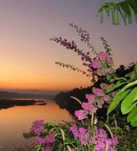 flowers-over-river